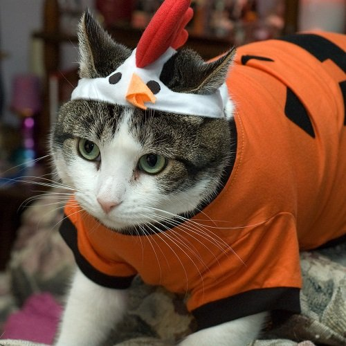 How to keep your pet safe with halloween