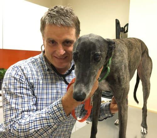 Veterinarian Joe Daley at the Ark Veterinary Hospital in Lindfield