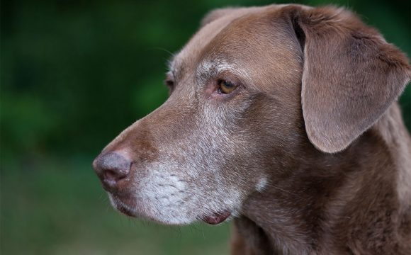 Senior pets   Ark Vets