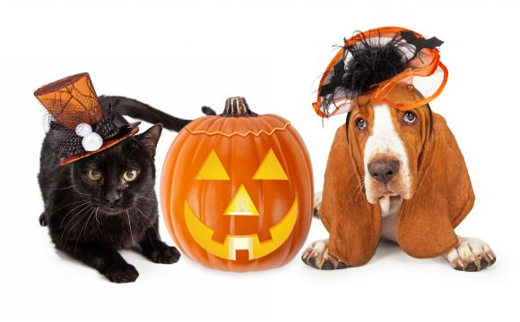 Keep your pet safe on Halloween
