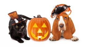 Keep your pet safe on Halloween