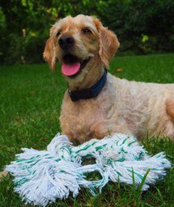 Pet of the month Alfie