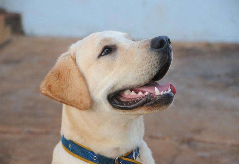 Pet dental | ark veterinary hospital