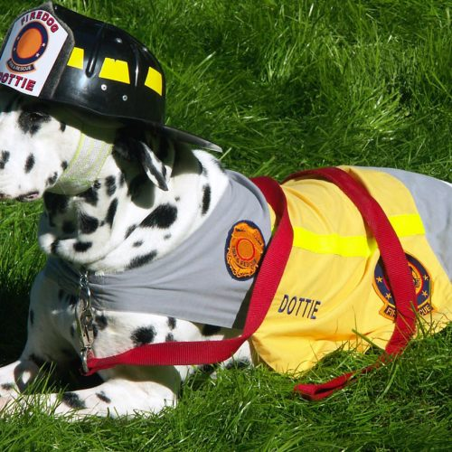 Pet Bushfire Survival Plan