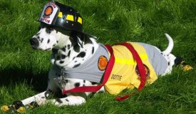 Pet Bushfire Survival Plan | Ark Vets