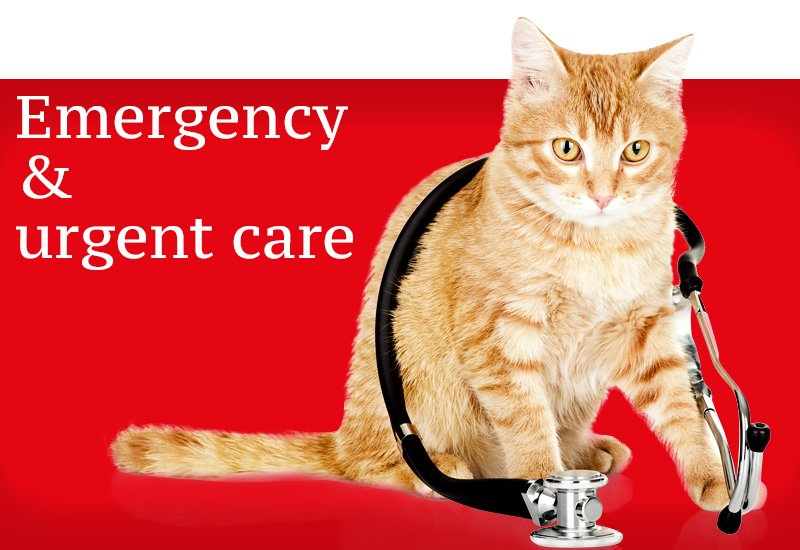 Pet Emergency care | Ark Veterinary Hospital