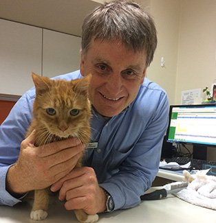 Dr. Joe Daley, veterinarian at the Ark veterinary hospital in Lindfield