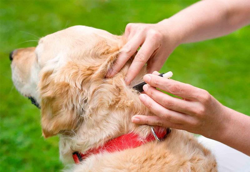 Flea, tick and parasite control