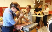 Pet health consults