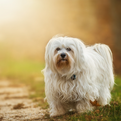 online appointment booking | Ark Veterinary Hospital