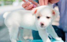 Pet vaccinations