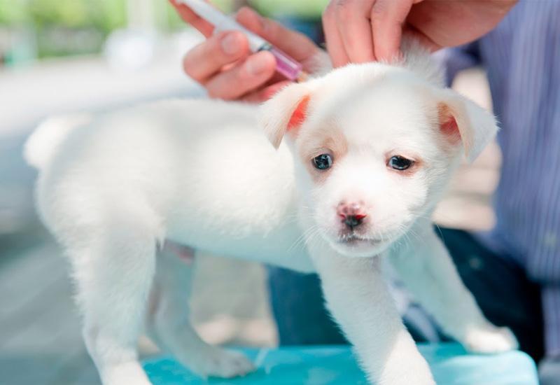 pet vaccinations | ark veterinary hospital