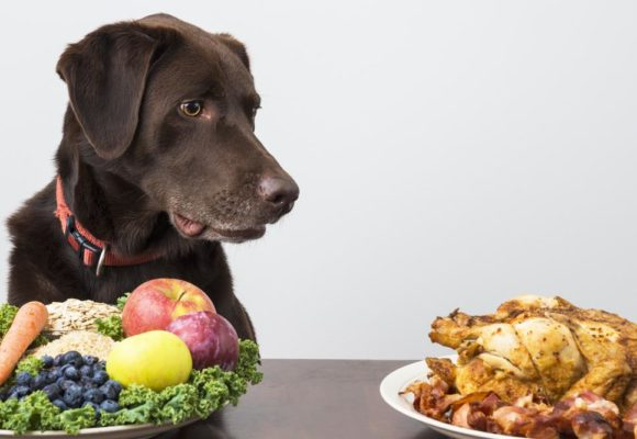 Pets & their food: a guide to the best nutrition