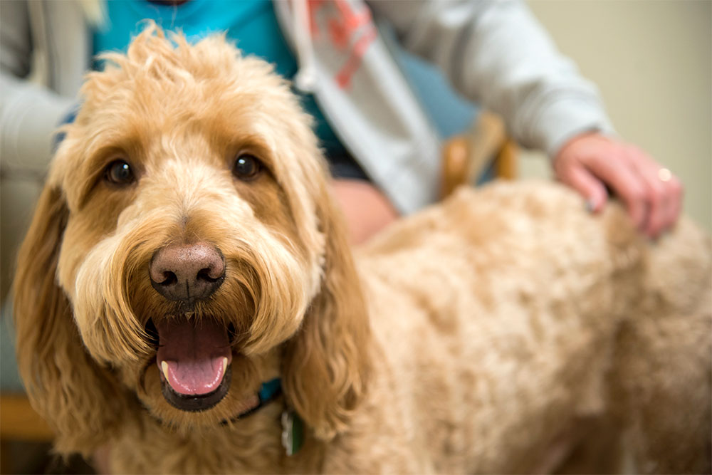 pet-behaviour-assesments with dr. Joe Daley at Ark Veterinary Hospital