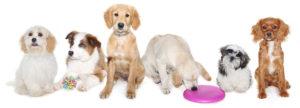 Delta puppy courses at the ark Veterinary Hospital
