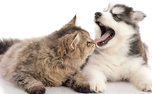 DENTAL DISEASE AND YOUR PET – How to tell and what to do?!