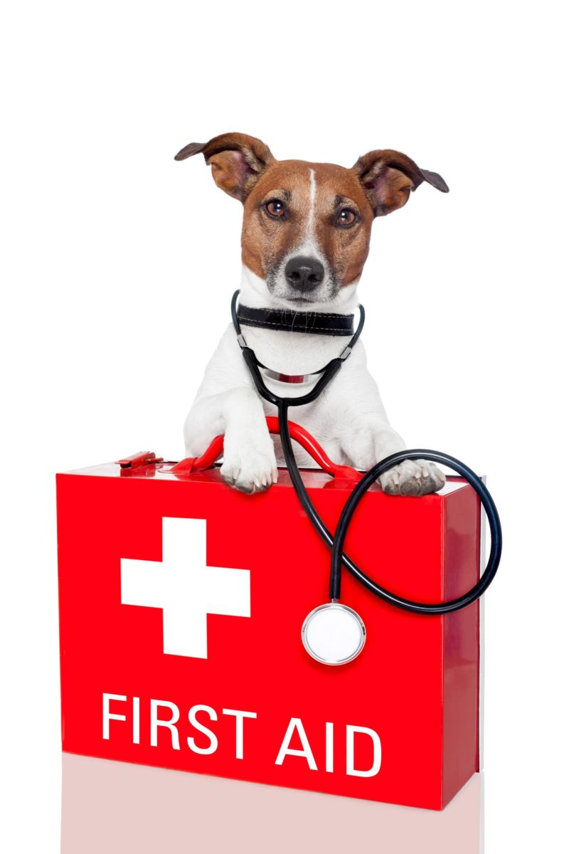 First aid course for pets