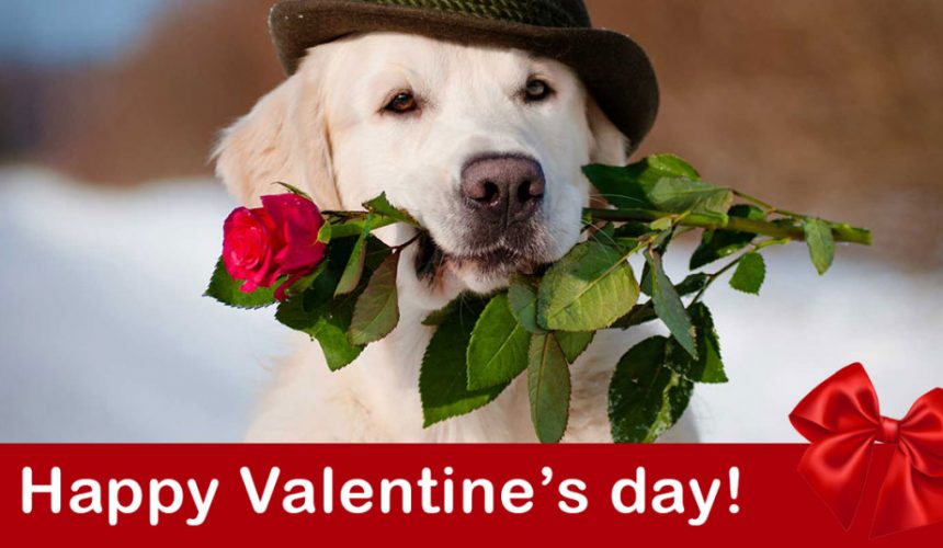 Pamper your pet on valentine's day!