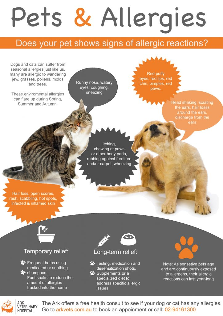 pets and allergies, the most common symptoms and treatments