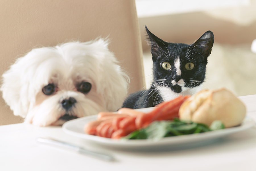 pet weight management: when you have an overweight or obese pet