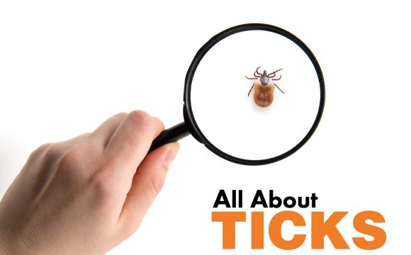ticks on dogs or cat | treatment and prevention