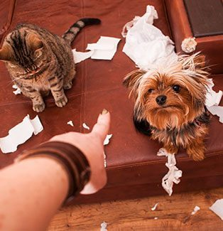 pet behaviour causes