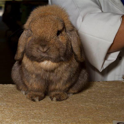 Vaccinations for rabbits