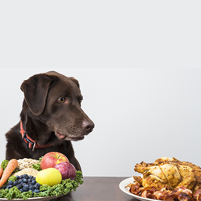 weight-loss for dogs and cats