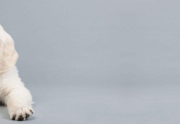 Checklist when buying a puppy