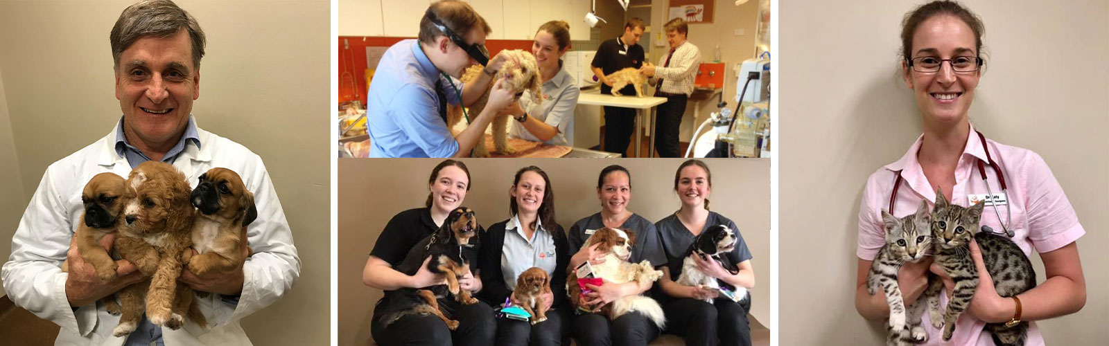 About the Ark Veterinary Hospital in Lindfield