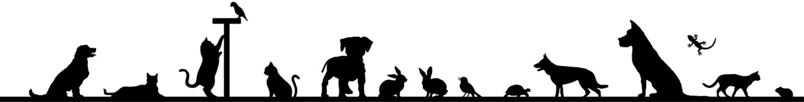 articles about pet care