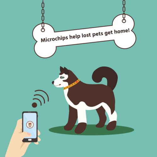 Microchipping and registration of your pet
