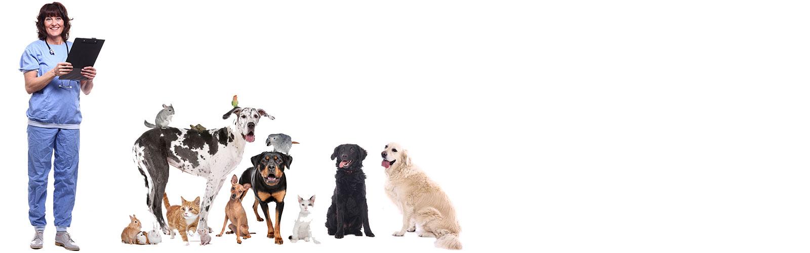 online veterinary booking
