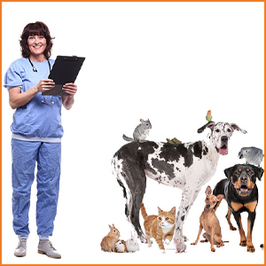 veterinary consults