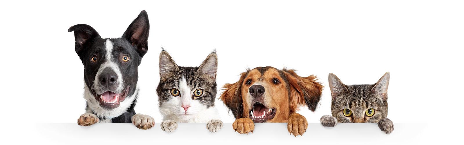 new veterinary clients