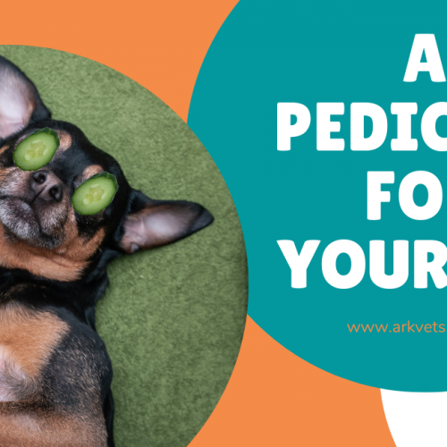 Why Your Pet Needs a Pedicure Too