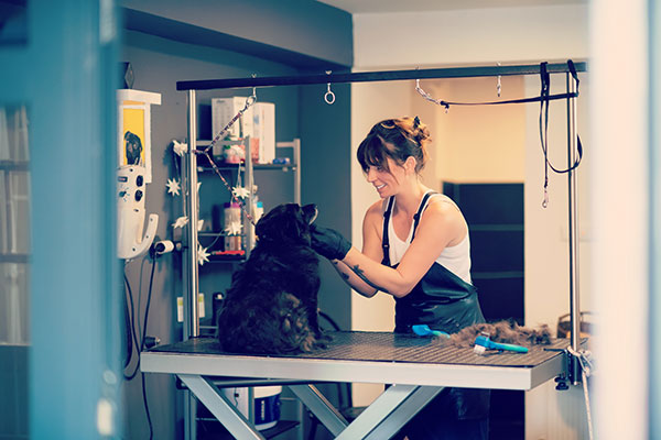 About our pet groomers