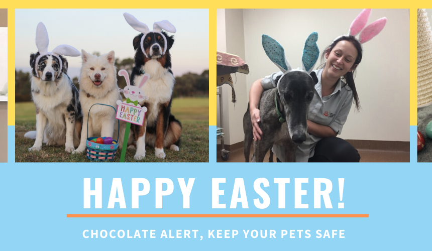 Dangerous foods for pets, keep your pets safe this Easter!