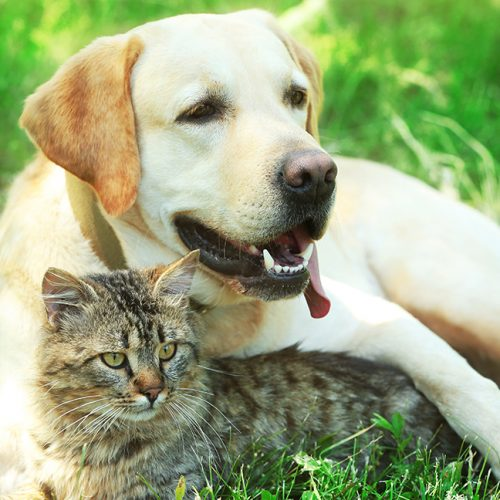 Vaccinations for cats and dogs – how important are they?