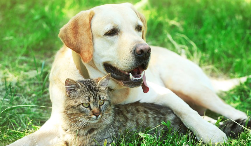 Vaccinations for pets – how important are they?