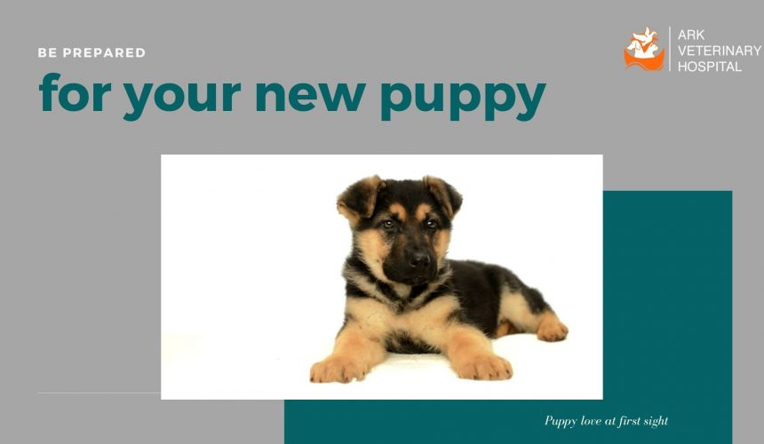 Be prepared for your new puppy: the ultimate puppy checklist